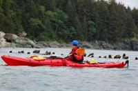 Picture of Juneau Shore Excursion: Tongass Wildlife Kayaking Adventure