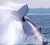 Picture of Half-Day Whale Watching and Canal Cruise from the Gold Coast