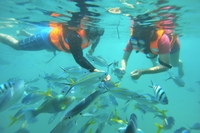 Island Swim and Snorkel Cruise from the Gold Coast