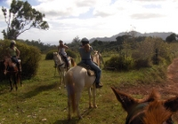 Kauai Horseback-Riding Adventure for Beginners