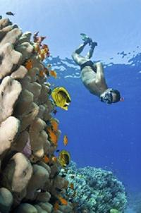 Oahu Certified Scuba Diving Tour