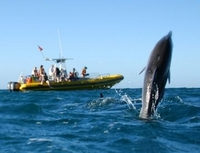 Waianae Coast Snorkel Cruise with Dolphin and Seasonal Whale Watching from Oahu