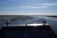 Private Tour: Florida Everglades Airboat Adventure and Wildlife Encounter Ticket