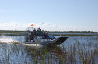 Picture of Private Tour: Florida Everglades Airboat Adventure and Wildlife Encounter Ticket