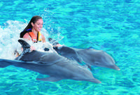 Puerto Vallarta Shore Excursion: Swimming with Dolphins