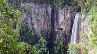 Springbrook National Park Rainforest and Waterfall Day Trip from Brisbane