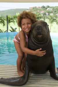 Picture of Sea Lion Encounter at Coral World Ocean Park