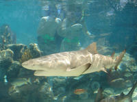 St Thomas Shore Excursion: Swimming with Sharks at Coral World Ocean Park