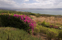 Haifa Shore Excursion: Private Nazareth and Sea of Galilee Day Trip