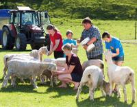 Agrodome Sheep Show and Farm Tour, Rotorua Tours and Sightseeing