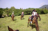 St Kitts Rainforest Horseback Riding Tour
