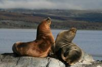 Beagle Channel and Seal Island Catamaran Tour from Ushuaia image 1