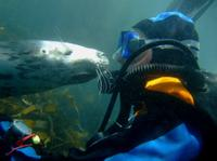 Puerto Madryn Shore Excursion: Scuba Dive with Sea Lions