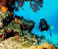 Best Cancun 2-Tank Reef or Wreck Dive