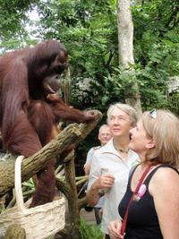 Singapore Flexi Attractions Pass: Singapore Zoo, Night Safari and Flyer