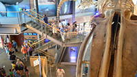 New Bedford Whaling Museum Admission