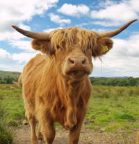 Scottish Highlands Day Trip from Edinburgh with Audio Guide