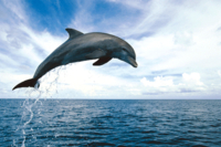Dolphin Watch and Snorkel Cruise