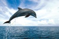 Key West Dolphin Watch and Snorkel Cruise Photo