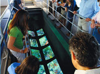 Picture of Key West Glass-Bottom Boat Tour with Sunset Option