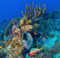 Key West Shore Excursion: Reef Express Snorkeling Tour