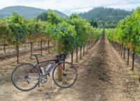Dry Creek Valley Bike and Wine Tour from Healdsburg