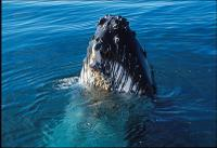 Whale-Watching Cruise and Fremantle Day Trip from Perth