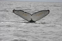 Picture of Whale Watching & Wildlife Eco Tour from San Francisco