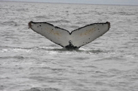 Whale Watching & Wildlife Eco Tour from San Francisco