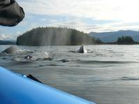 Ketchikan Shore Excursion: Zodiac Boat Wilderness Adventure