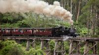 Melbourne Combo: Great Ocean Road plus Healesville Sanctuary and Puffing Billy and Melbourne Attraction Pass image 1