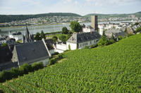 Private Tour: Customizable Rhine Valley Day Trip from Frankfurt