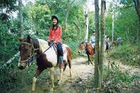 Horse Riding Tour from Cairns, Cairns Horse Riding & Horse Trekking