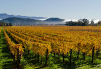 San Francisco Shore Excursion: Private Tour to Wine Country by Luxury Transport Picture