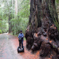 Armstrong Redwoods...