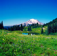 Mt Rainier Day Tour from Seattle