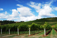 2-Day Wine Tour from Portland: Willamette Valley and Mt Hood