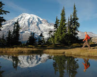 Mt Rainier Hiking or Snowshoeing Tour with Lunch