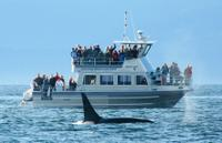 Whale-Watching Cruise with Expert Naturalists