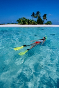 Roatan Shore Excursion: Small-Group Snorkeling Tour and Private Beach Access