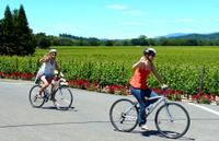 Wine Country Bike Tour and Picnic Lunch with Transport from San Francisco