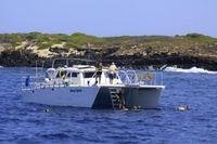 Small-Group Eco-Tour: Snorkel and Wildlife Catamaran Cruise from Waianae