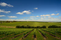 Imagen Daylesford Private Winery Tour