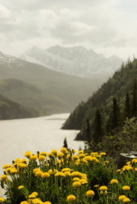 Chugach State Park Hiking Tour from Anchorage with Full-Day or Half-Day Option