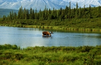 Picture of Chugach State Park Hiking Tour from Anchorage with Full-Day or Half-Day Option