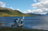 Redoubt Bay Bear Viewing and Seaplane Tour from Anchorage