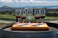 Niagara Falls Wine Tour with Cheese Pairing