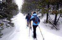 Front Range Snowshoeing Adventure from Denver
