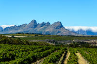 Private Stellenbosch, Franschhoek and Paarl Wine Tasting Tour from Cape Town
