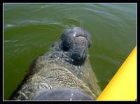 Florida Everglades Small-Group Eco-Adventure by Foot, Kayak and Boat
